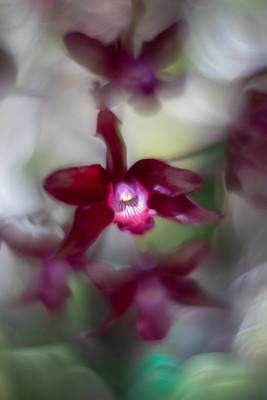 Flowers SMALL-20190312-6073.jpg