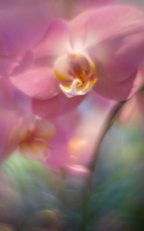 Flowers SMALL-20190317-0285-2.jpg