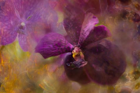 Flowers SMALL--8.jpg