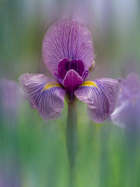 Flowers SMALL-2554.jpg
