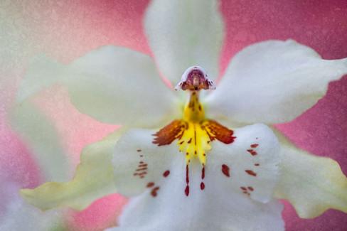 Flowers SMALL--6.jpg
