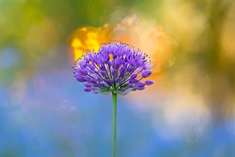 Flowers SMALL-2456.jpg