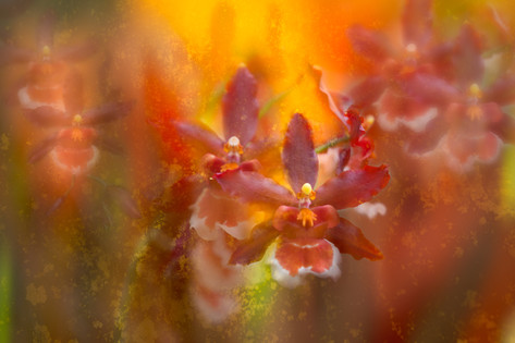 Orchids on Fire
