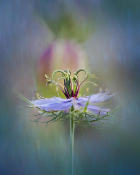 Flowers SMALL-2031.jpg
