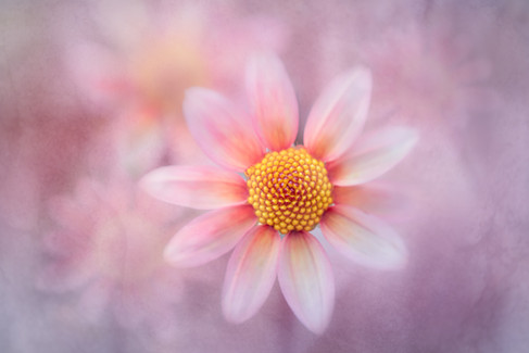 Flowers SMALL-2892.jpg