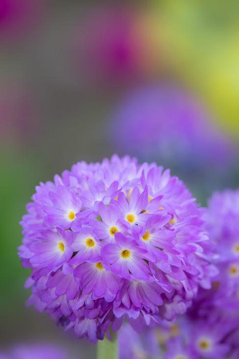 Flowers SMALL-1866.jpg