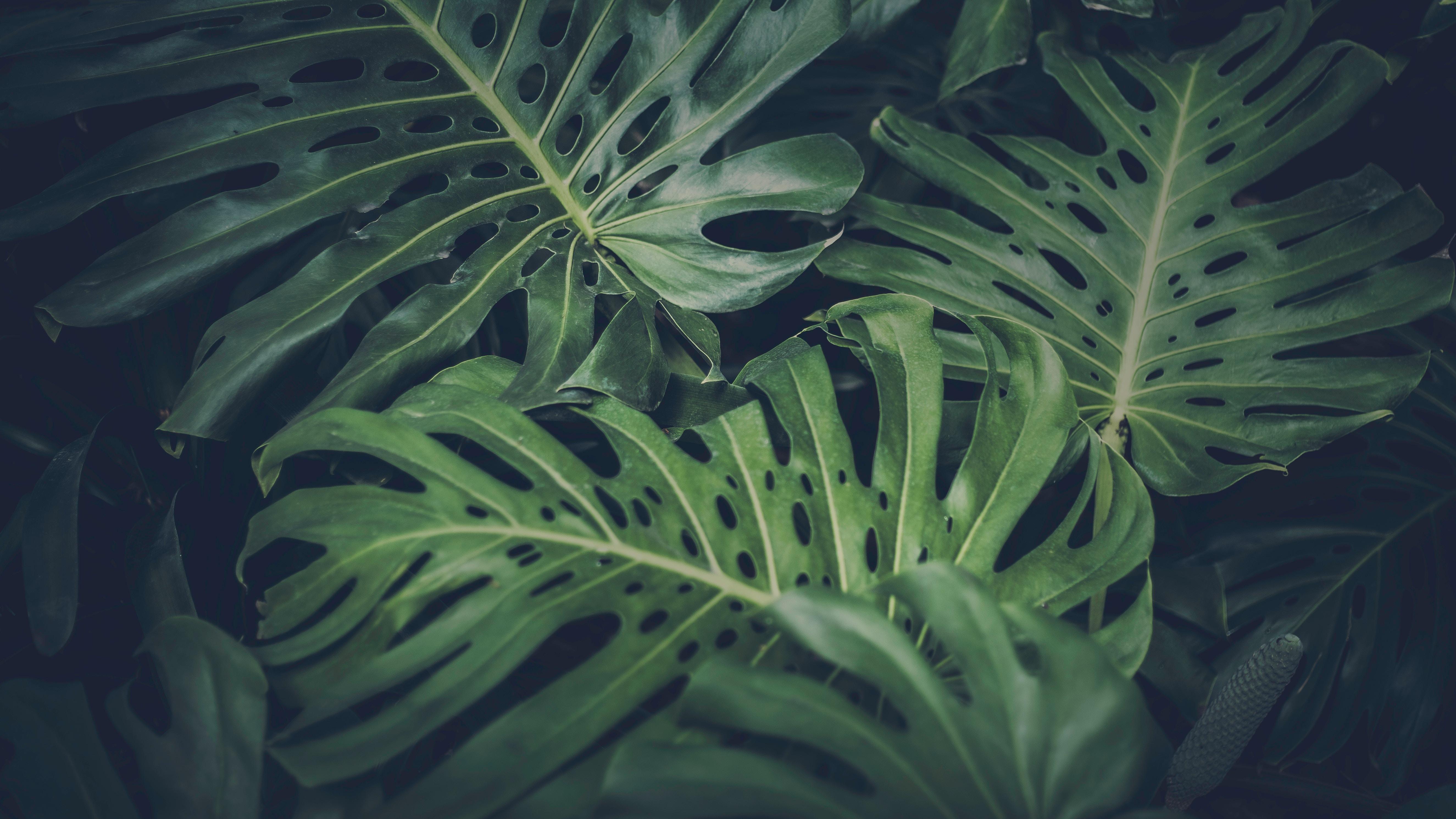 salt + waves palm leaves