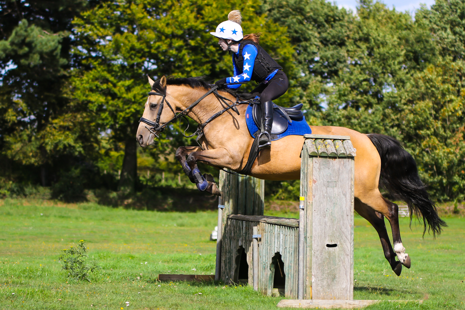 equestrian photography bexley