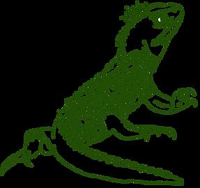 tuatara (reusable image+no background).p