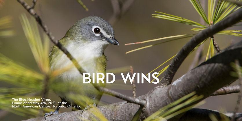 BIRD WINS.jpg