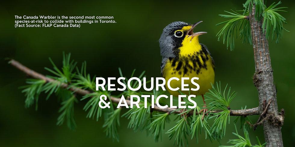 Resources & Articles.jpg
