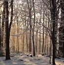 Beech_forest_Mátra_in_winter.jpg