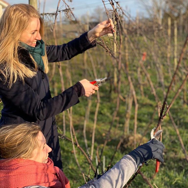 Wijnboer voor een dag (helpen op de wijngaard)