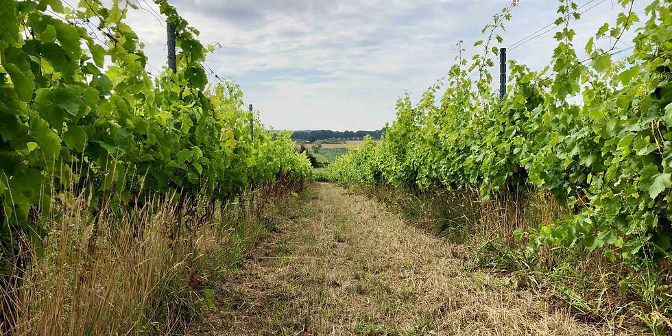 Wijntuinen Wijnwandeling