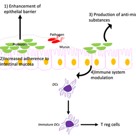 What are the mechanisms by which probiotics exert their effects?