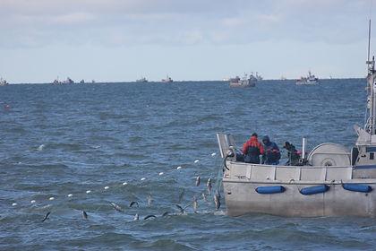 fishing gillnetting JK.JPG