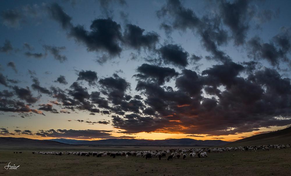 Fin de journée sur le troupeau