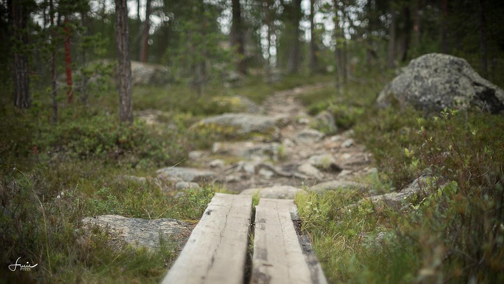 Vers l'église des terres sauvages de Pielpajärvi