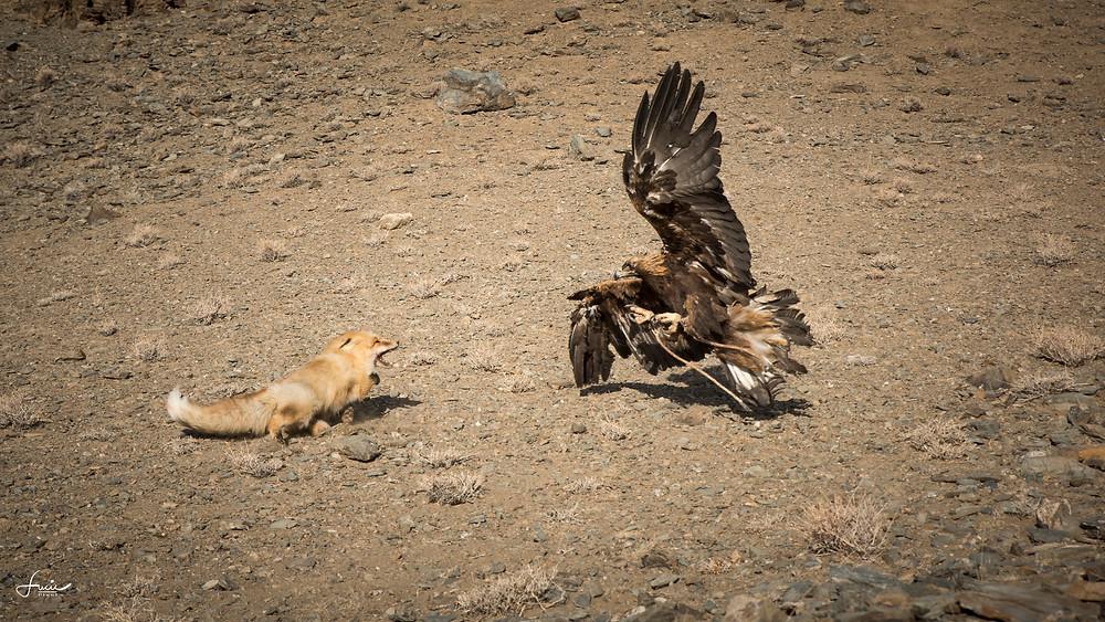 L'attaque de l'aigle