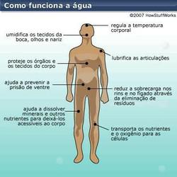 água organismo