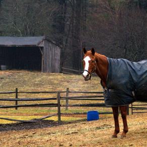Winter Care for the Senior Horse