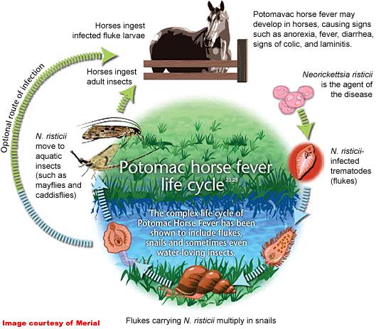 PHF Life Cycle