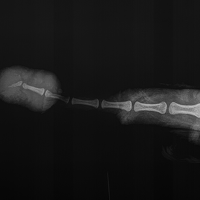 Interesting & Unusual Case: A Short Tail
