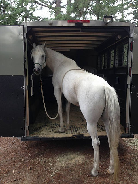 Traveling At Home Abroad Tacoma Equine Hospital Horse