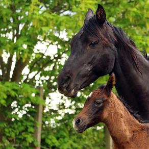 Breeding & Pregnancy Care