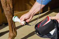 cold laser therapy on horse's leg