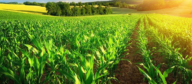 agriculture-crops-farming-gm.jpg