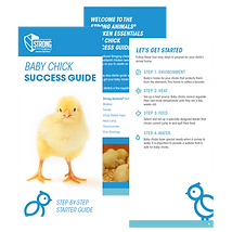 Baby Chick Success Guide.png