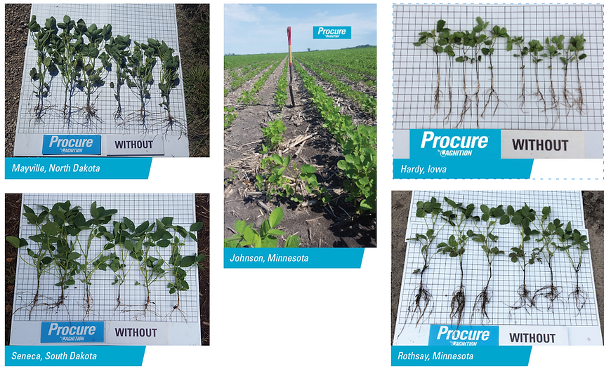 Procure_SuccessInField_Soybeans.png