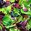 Thumbnail: The Taproots Salad