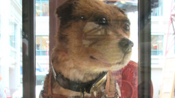 "Meeting Owney ""In Person"" at the National Postal Museum"