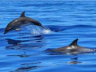 Delfines de la Amazonía están contaminados con mercurio, revela informe de organizaciones ambientale