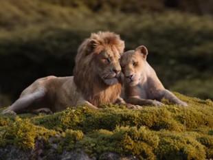 Simba y Nala demuestran amor en el nuevo tráiler de 'El Rey León', que adelanta su fecha de