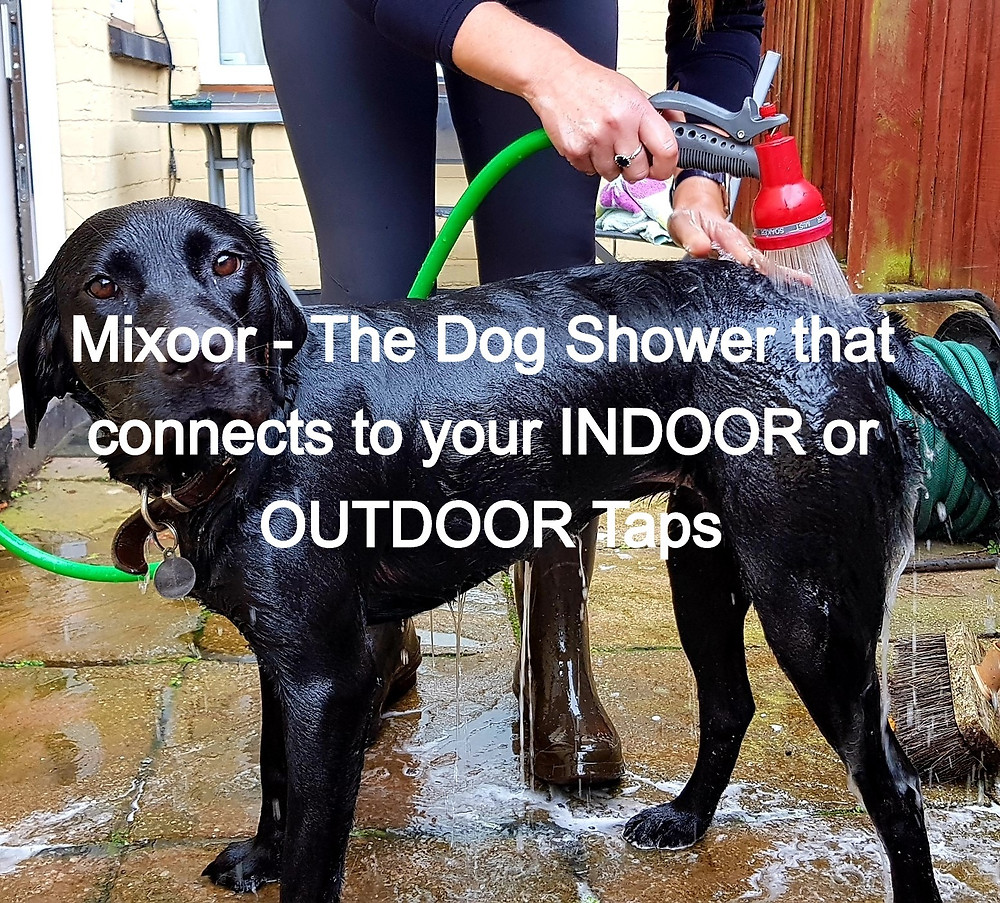 Wash your dogs with water at the RIGHT Temperature