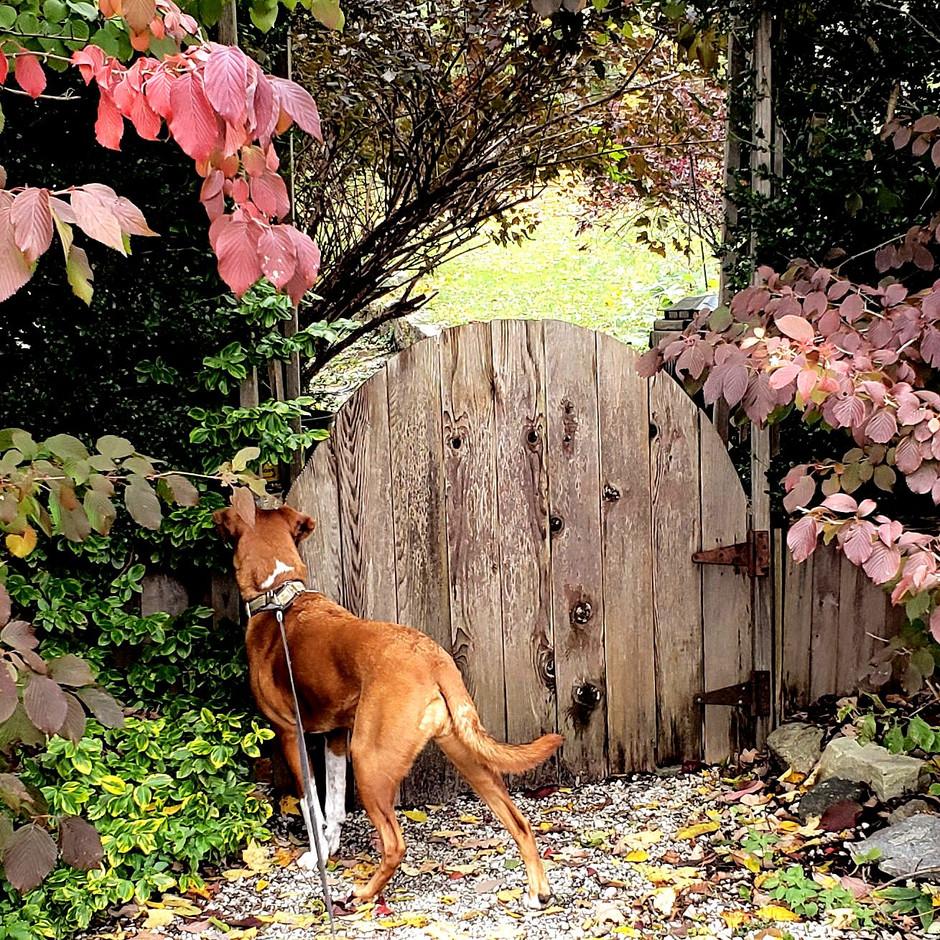 Sageism's Tuesday - Doors