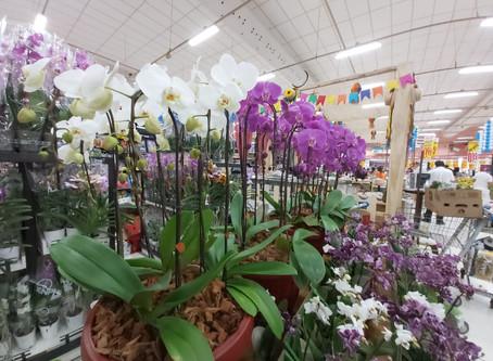 O poder e a beleza das orquídeas: 10 dicas de cuidados com o seu orquidário particular