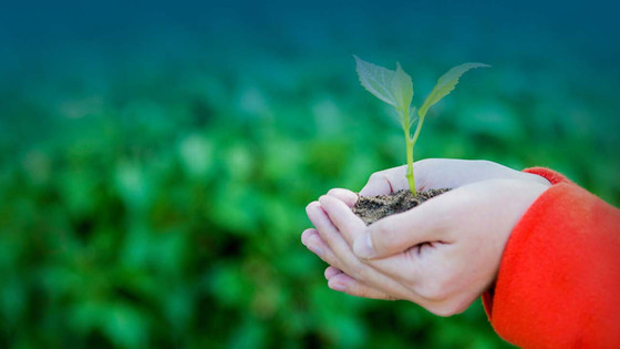 Influencing Bottom Line Impacts of Wellbeing Investments