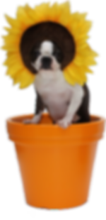 TORI FLOWER SUN GIRL GK.png