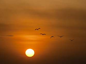 Flying Far, Far Far Away