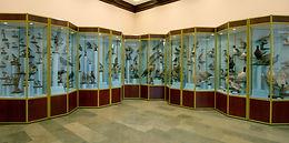 Muzeum Przyrodnicze WPN. Sala ornitologi