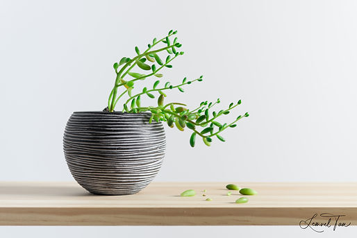 Succulent I (AURE V1).jpg