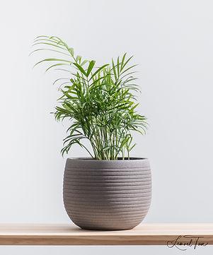 Plant (AURE V1).jpg