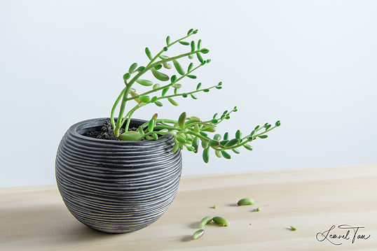 Succulent II (AURE V1).jpg