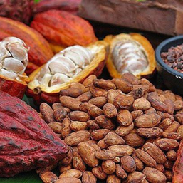 Sweet like Cocoa: Insights on Ghana's Cocoa Industry