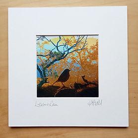 23 cm sq mounted print, Lakeland Robin