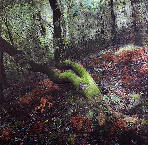 Moss girl | Olfactory tapestry (2021)